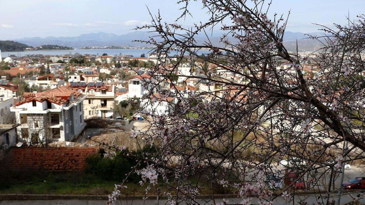 Fethiye'de bademler çiçek açtı