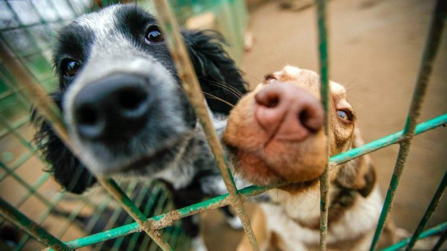 Sokak hayvanlarını sahiplendirme rekoru kırıldı