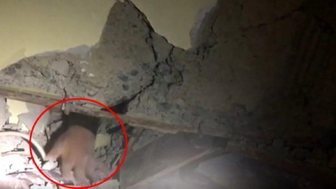 Depremin sembol isimlerinden Azize Çelik'in ailesi enkazdan böyle çıkarıldı