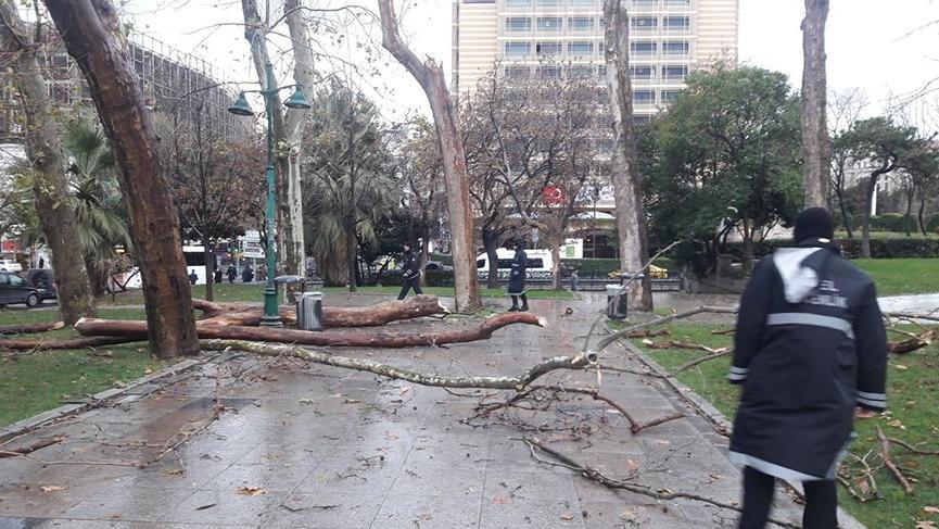 Gezi Parkı'nda ağaçlar kurudu!