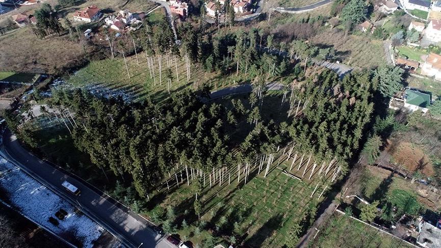 Atatürk Köşkü Ormanları, böcek istilasından kurtarıldı