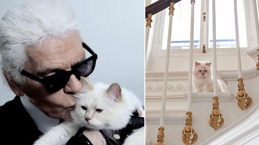 Karl Lagerfeld'in kedisi Choupette mirasın tadını çıkarıyor