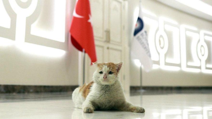 Depremzede kedi yeni evinde