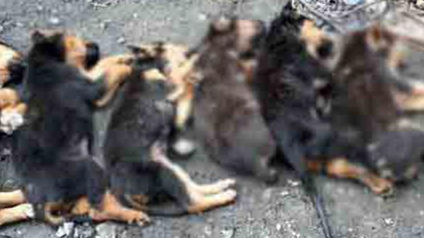Korkunç olay! Yavru köpekleri zehirlediler