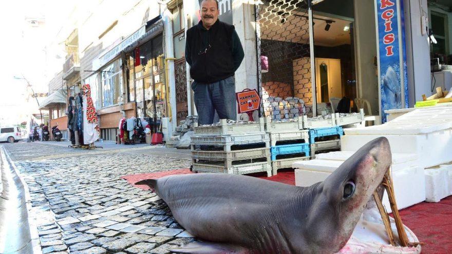 Marmara'da yakalandı! 3 metrelik dev