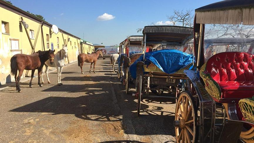 İBB, fayton ve atları satın almaya başladı