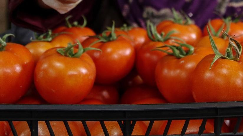 Rusya sınırında bekleyen domatesler çöpe gidecek