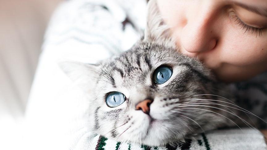 Dünya Kediler Günü ne zaman ortaya çıktı? 17 Şubat Kediler Günü tarihçesi…