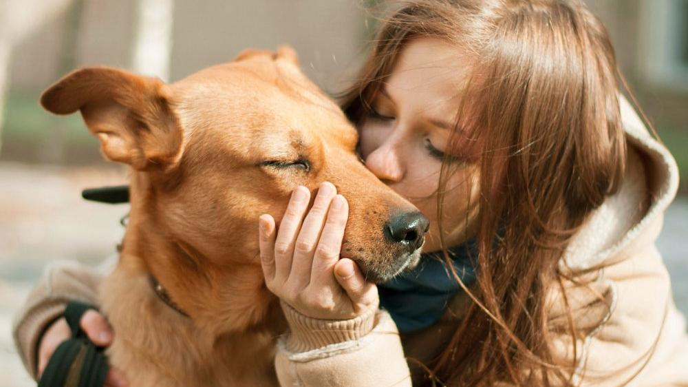 Evcil hayvan sahipleri ve bakıcıları AXA güvencesinde