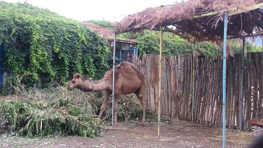 AKP'li belediye hayvanat bahçesindeki hayvanları satışa çıkardı
