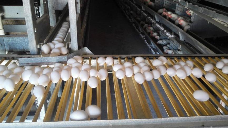 Corona virüsü yumurta üreticisini de vurdu, iflaslar başladı