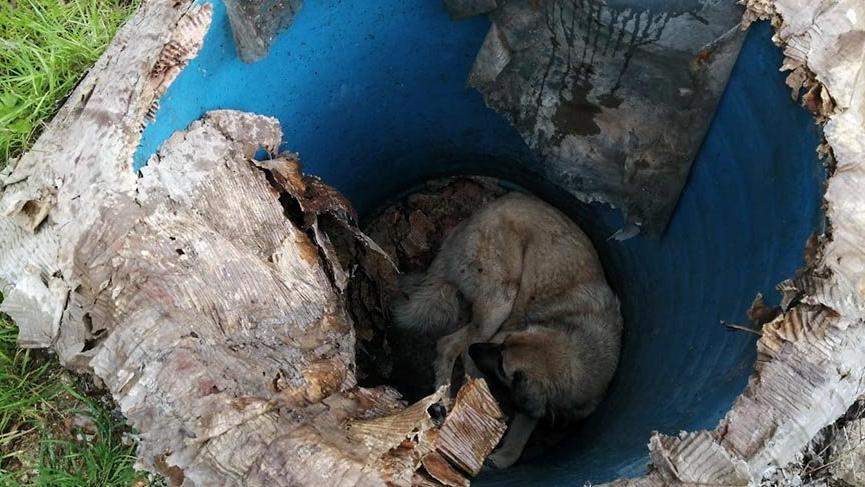 Rögara düşen sokak köpeği kurtarıldı