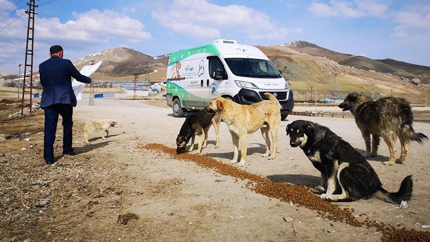 Van Büyükşehir Belediyesi sokak hayvanlarını unutmadı