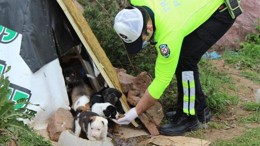 Polisler sokak hayvanlarına mama bıraktı