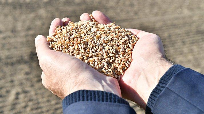 TMO'dan 175 bin tonluk buğday ithalatı