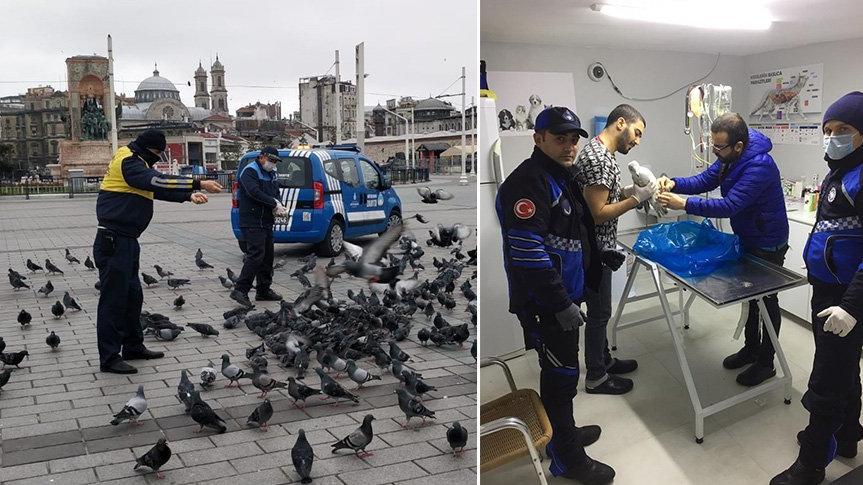İstanbul'un can dostları zabıtaya emanet