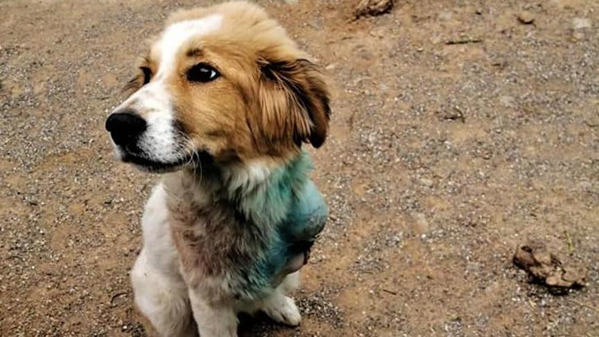 Hayvanseverlerden sokak hayvanları unutulmasın kampanyası