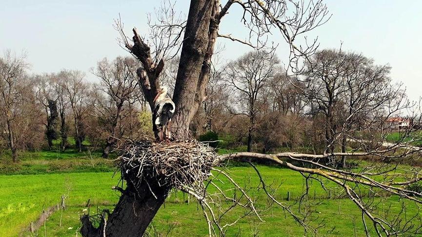 Kuş Cenneti 900 leylek yuvasına ev sahipliği yapıyor