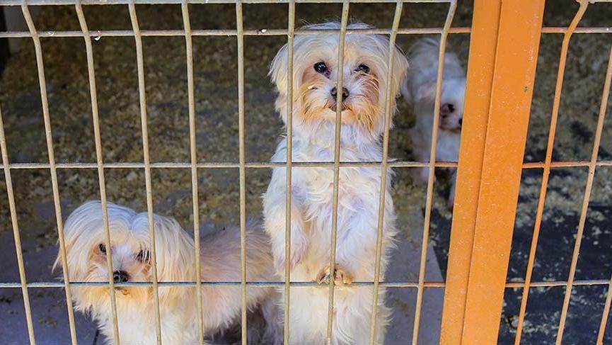 Evcil hayvanlar da virüs mağduru oldu