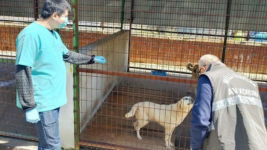 Tarım ve Orman Bakanlığı sokak hayvanları için harekete geçti