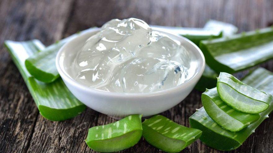 Aloe vera nedir? Aloe veranın sağlığımıza faydaları nelerdir?