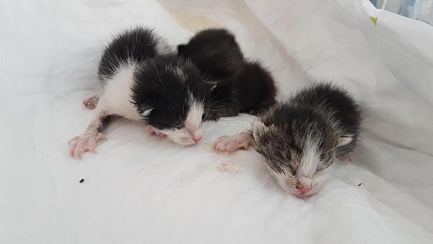 Anneleri ölen yavru kedilere, özel yapım kuvözde tedavi