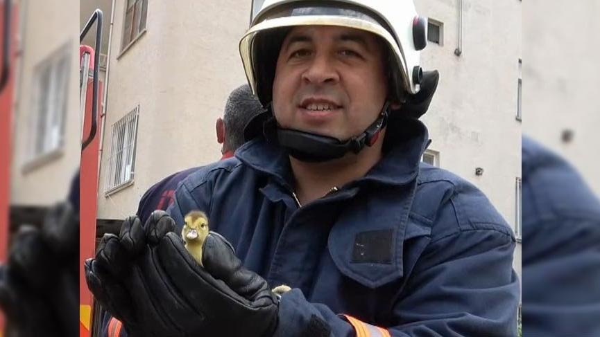 İtfaiye şaşkın ördeğin yavrularını 4. katın balkonundan kurtardı