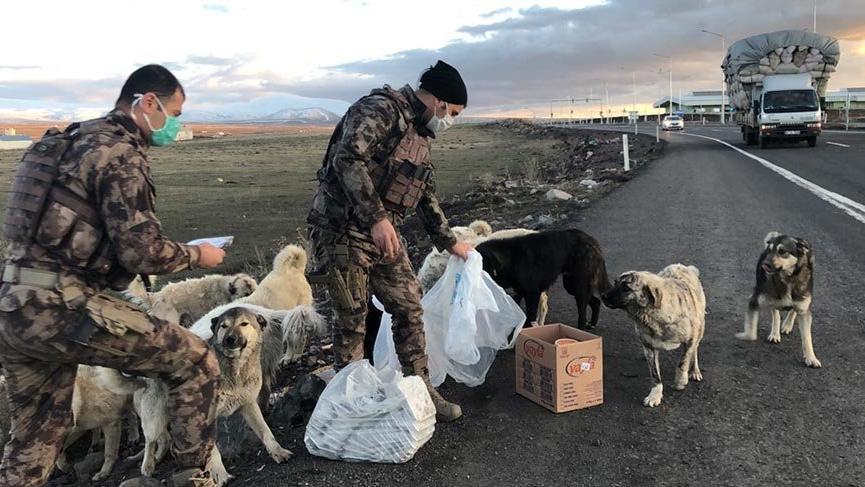 Yiyeceklerini sokak köpekleri ile paylaşan polisler ödüllendirildi