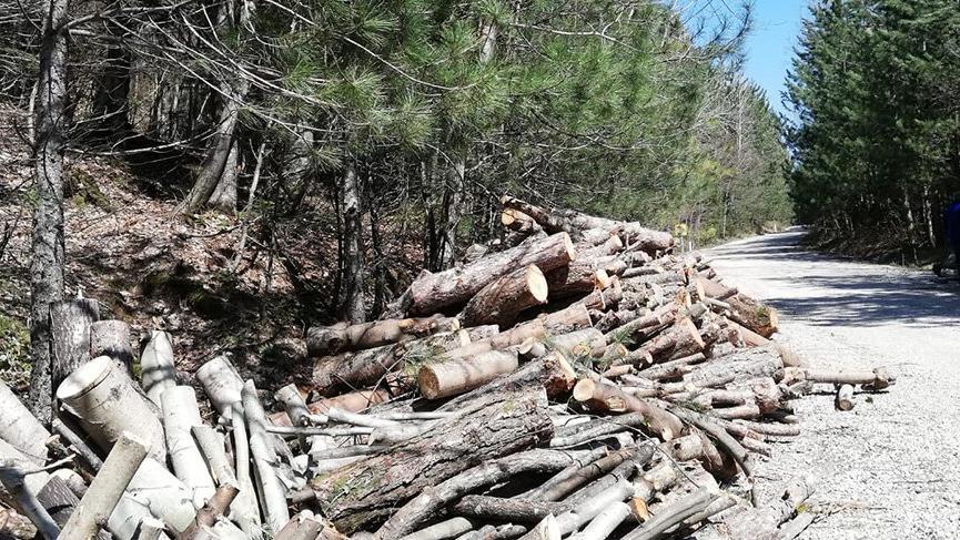 Coronayı fırsat bilip Uludağ'da ağaçları kestiler