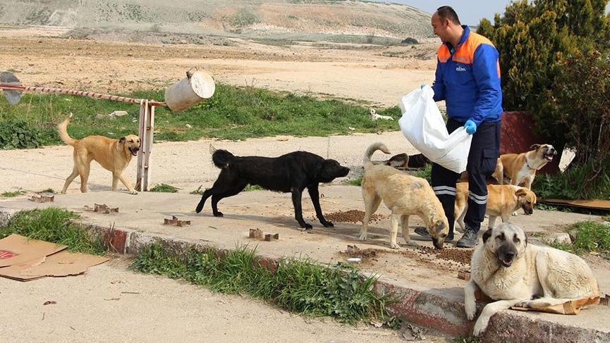 Nilüfer'de can dostlar için seferberlik