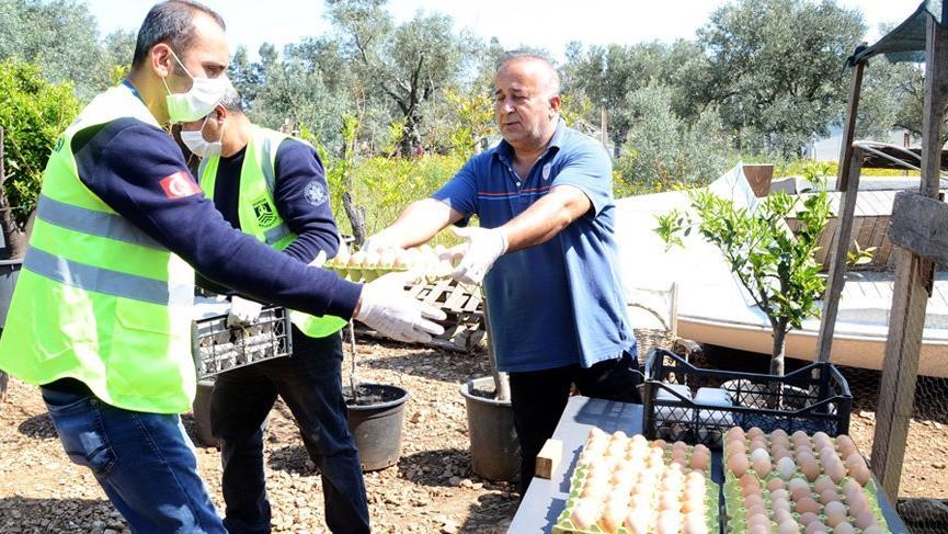 Bodrum Belediyesi üreticinin elinde kalan 5 bin yumurtayı satın aldı!
