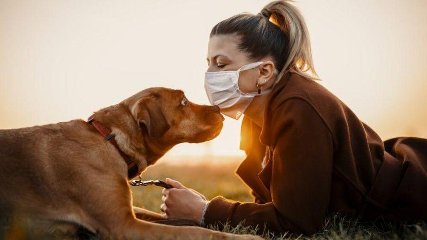 Virüs korkusu nedeniyle evcil hayvanlarınızı terk etmeyin