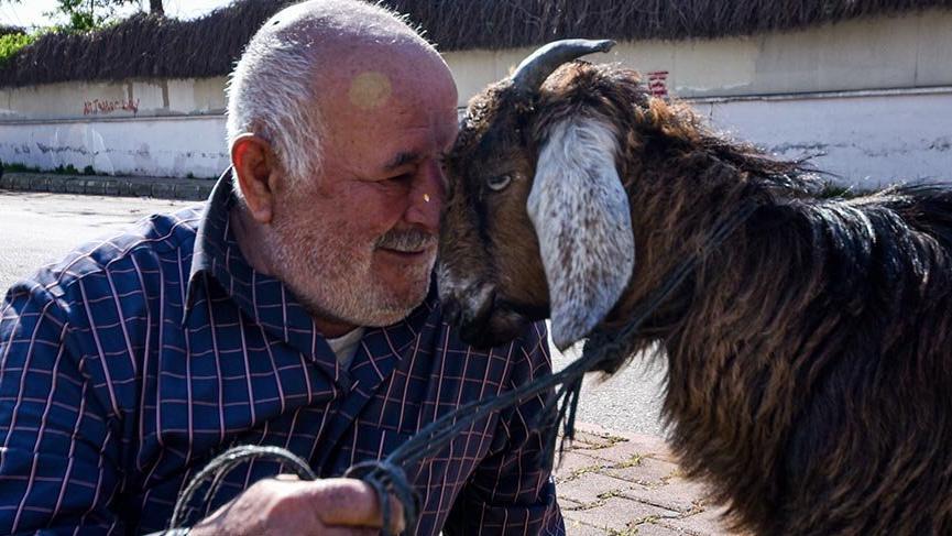 Bağ kurduğu yavru keçi 'Yörük Kızı'nı, yanından ayırmıyor