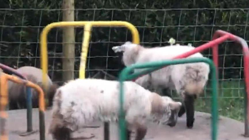 Çocuk parkının tadını koyunlar çıkardı