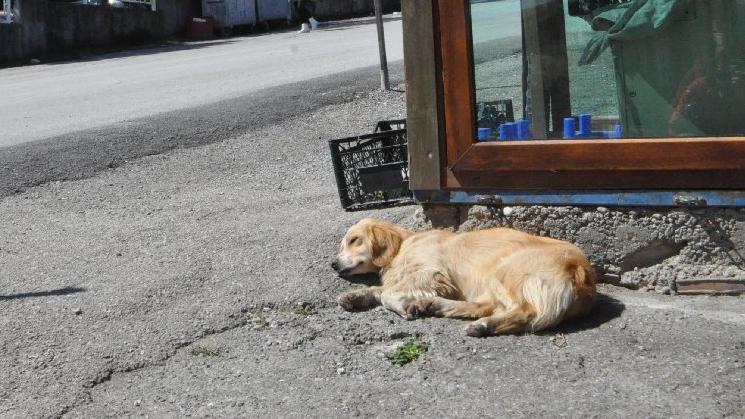 Sahibi tedaviye alınan köpek, hastane önünde bekliyor