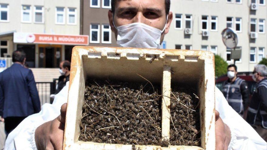 Bursa'da binlerce arı zararlı tarım ilaçları nedeniyle öldü