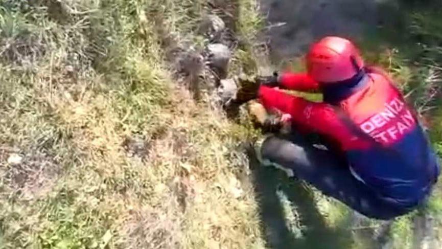 Çukura düşen kaplumbağaları itfaiye kurtardı
