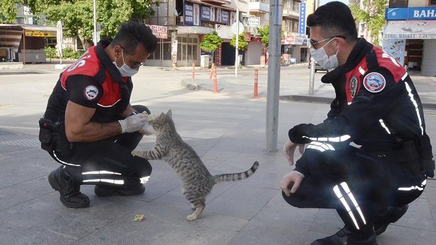 Aç kalan kediyi, yunus ekibi besledi