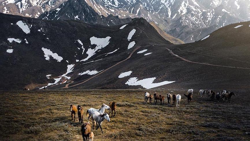 Emir Dağları'ndaki yılkı atları havadan görüntülendi