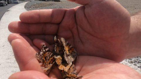 Prof. Dr. Sevgili: Daha önce görmediğimiz böcek türlerine rastlayacağız
