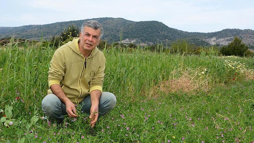 Datça'nın atalık tohumları toprakla buluşuyor