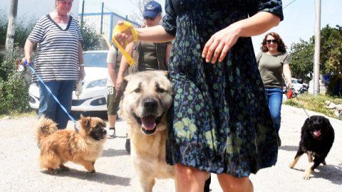Hayvanseverlere müjde: Sokak hayvanlarını gezdiren ve besleyenlerin cezası iptal edildi