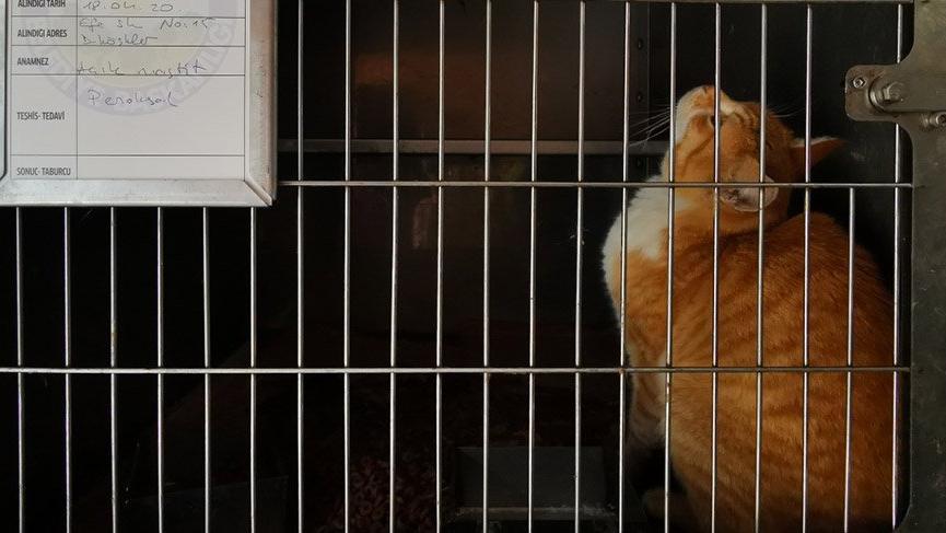 'Corona korkusuyla çok sayıda hayvan sokaklara terk edildi'