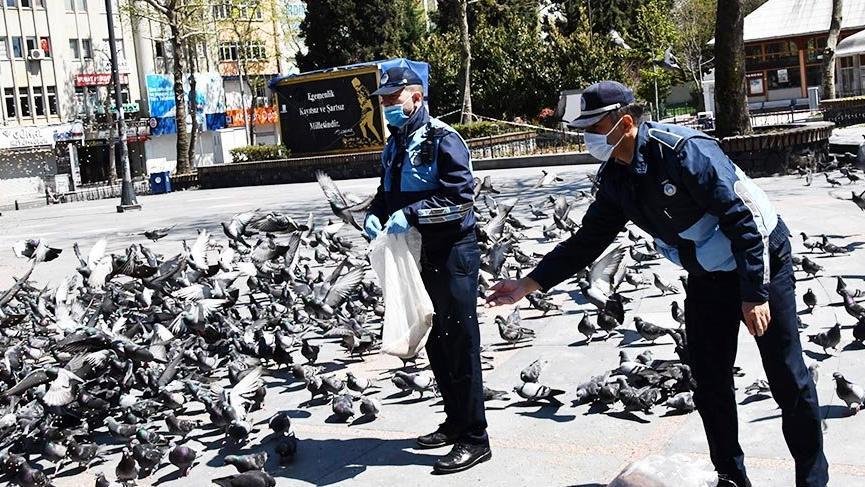 Tekirdağ'da güvercinleri zabıta besledi