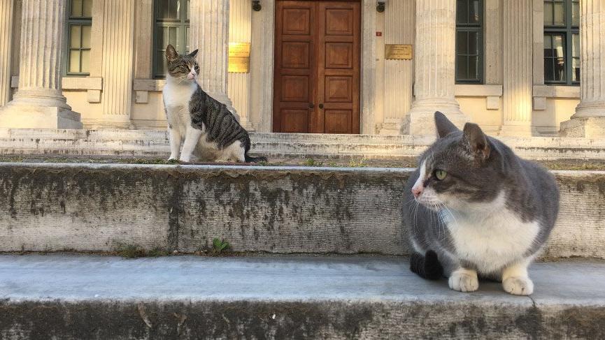 İstanbul'da cadde ve meydanlarsokak hayvanlarına kaldı