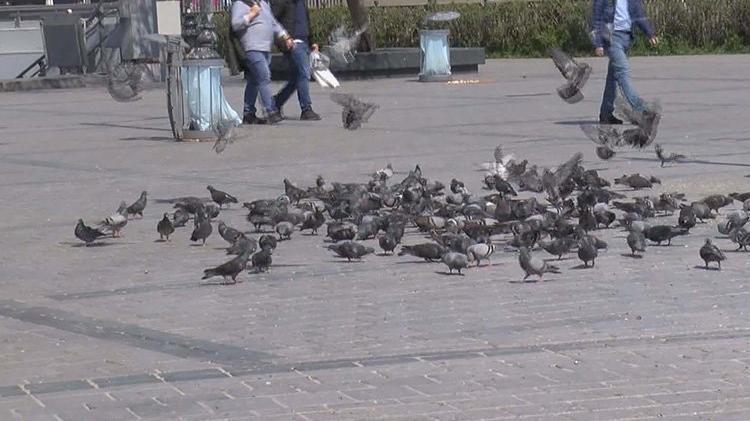 Eminönü'nde feci olay: Arabasıyla güvercinleri ezdi