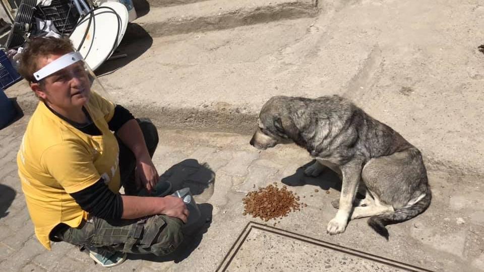 AHBAP'tan sokak hayvanlarına mama yardımı