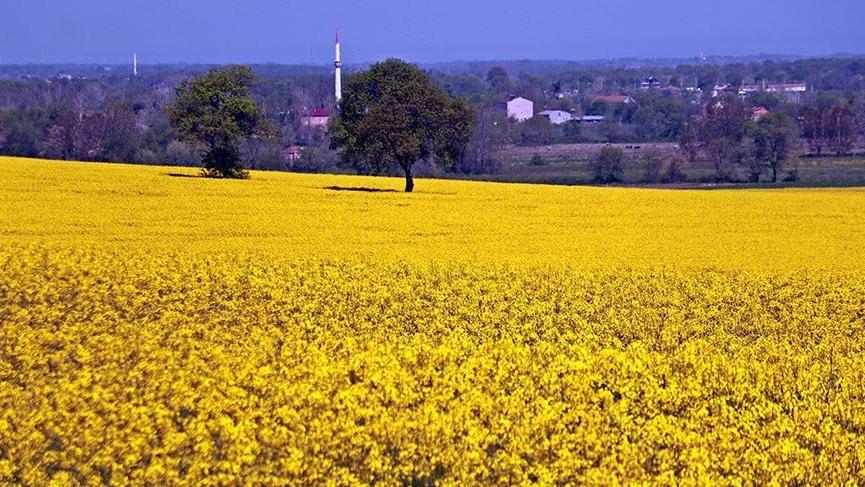 Sarıgazel Tabiat Parkı, sarıya büründü