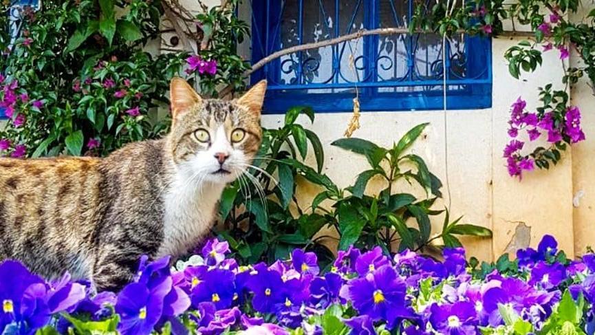 Kaleiçi sokakları çiçeklerle süslendi