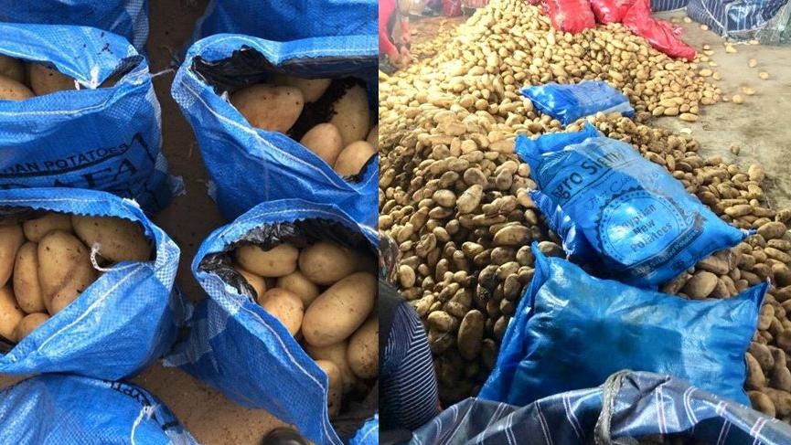 Patatesin başkentine ithal patates